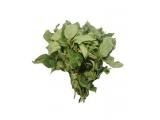 scent leaf